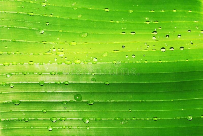 Wassertropfen auf grünem Blatt lizenzfreie stockfotos