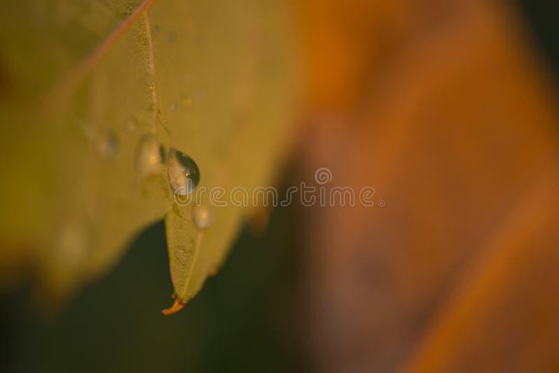 Wassertropfen auf Herbstblatt lizenzfreie stockbilder