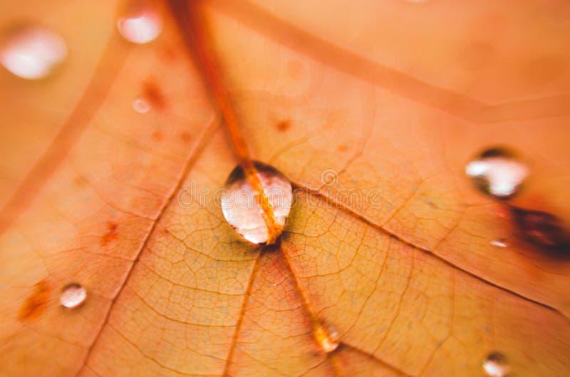 Wassertropfen auf orange Blatt Makro eines Blattes lizenzfreie stockfotos