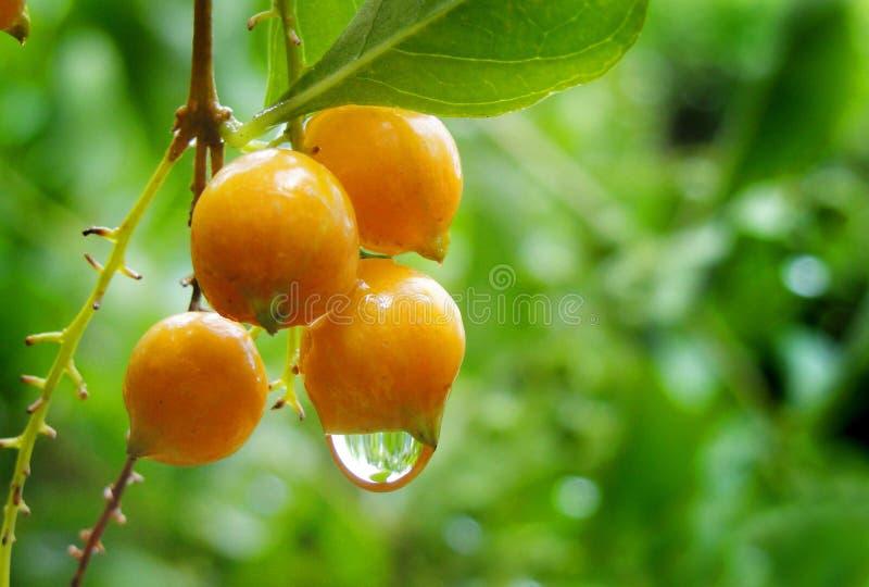 Wassertropfen auf orange cooured Samen lizenzfreie stockfotografie