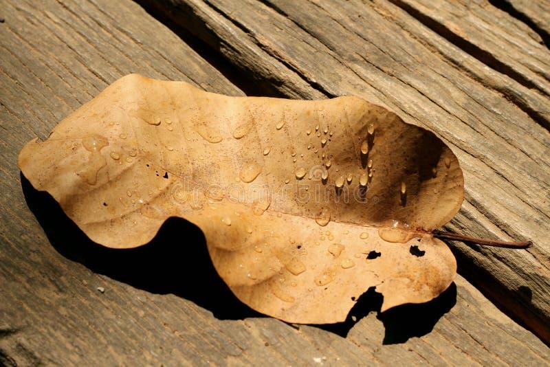 Wassertropfen auf trockenen Blättern lizenzfreie stockbilder