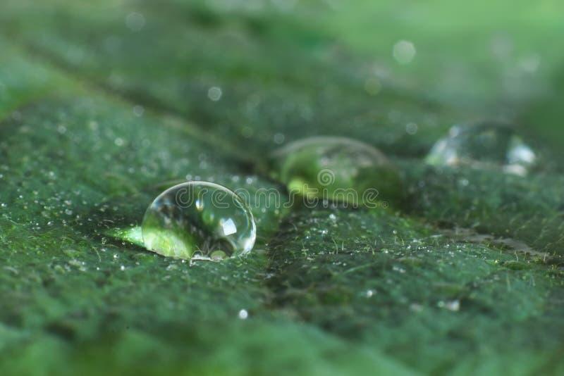 Wassertropfen schloss oben auf veiny grünem Blatt lizenzfreie stockbilder