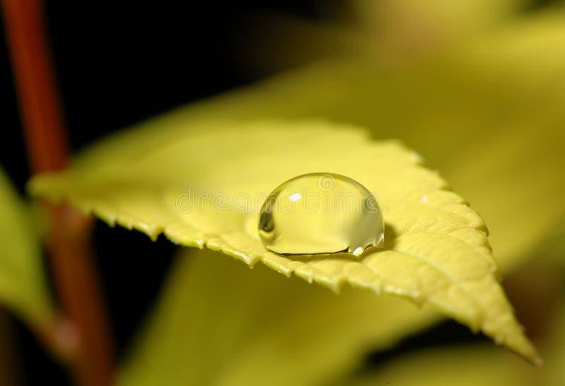 Wassertropfenblatt stockfoto
