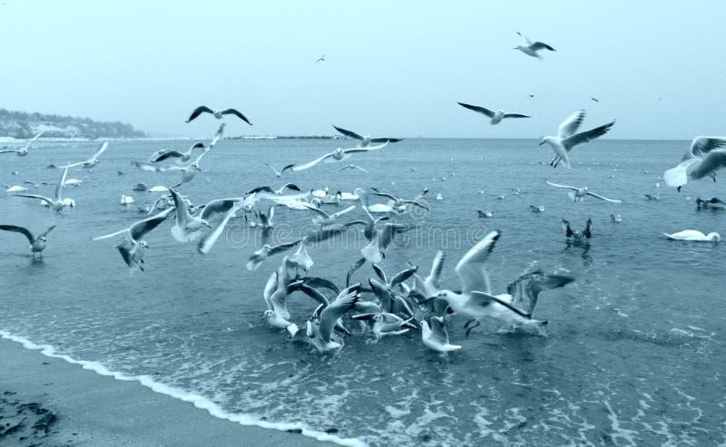 Wasservogelerschütterung stockbild