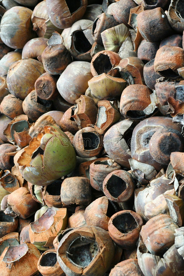 Waste Coconuts stock images