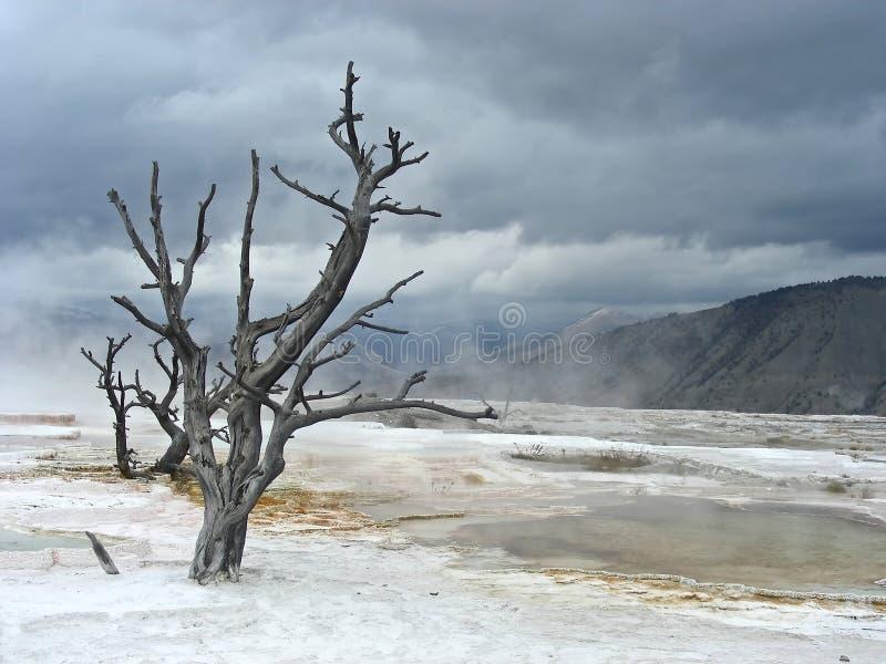 wasteland arkivfoton