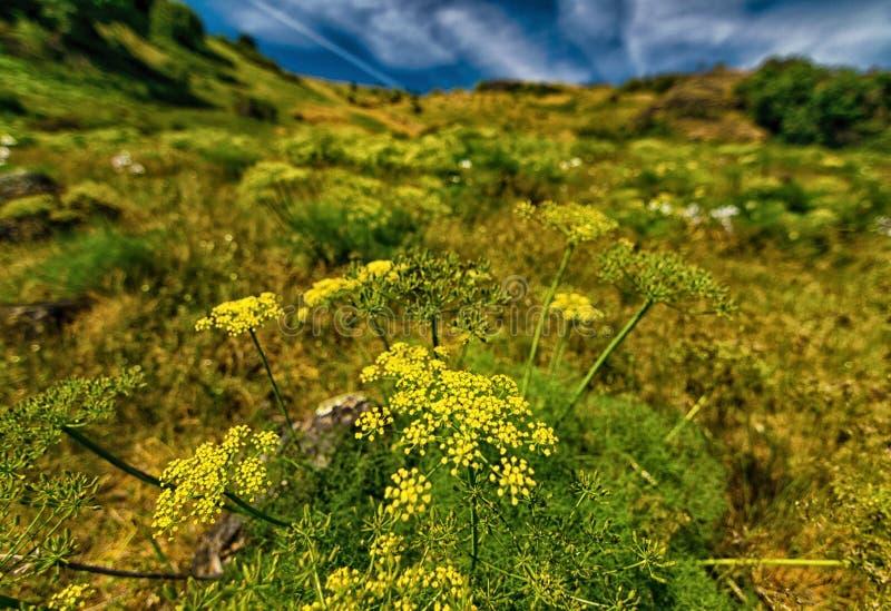 Waszyngtońscy Dzicy kwiaty fotografia royalty free