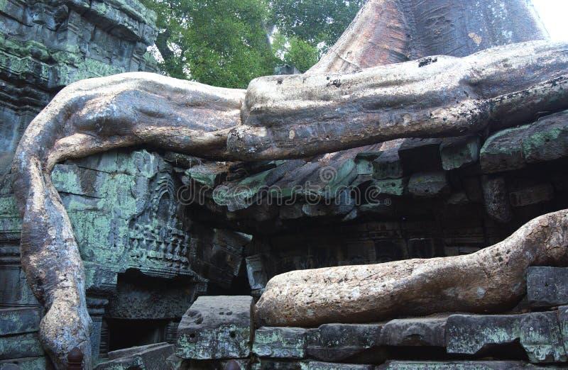 wat виска руин Камбоджи angkor стоковое фото