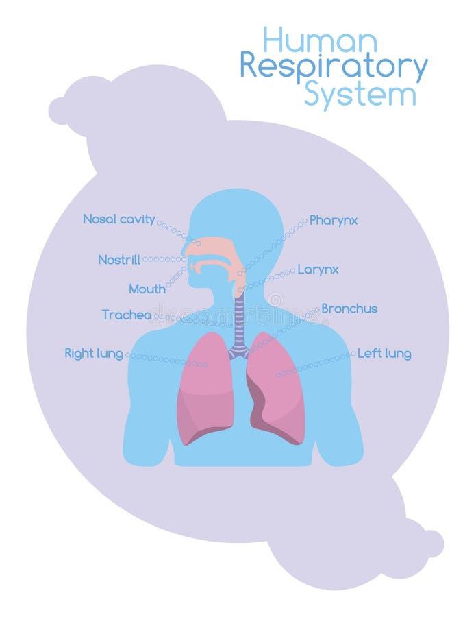 Wat binnen menselijk ademhalingssysteem is stock illustratie