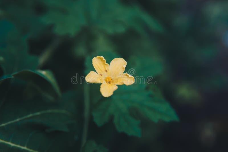 Wat bloembloei in de ochtend Werkelijk verfrist een oog dat het ziet royalty-vrije stock fotografie