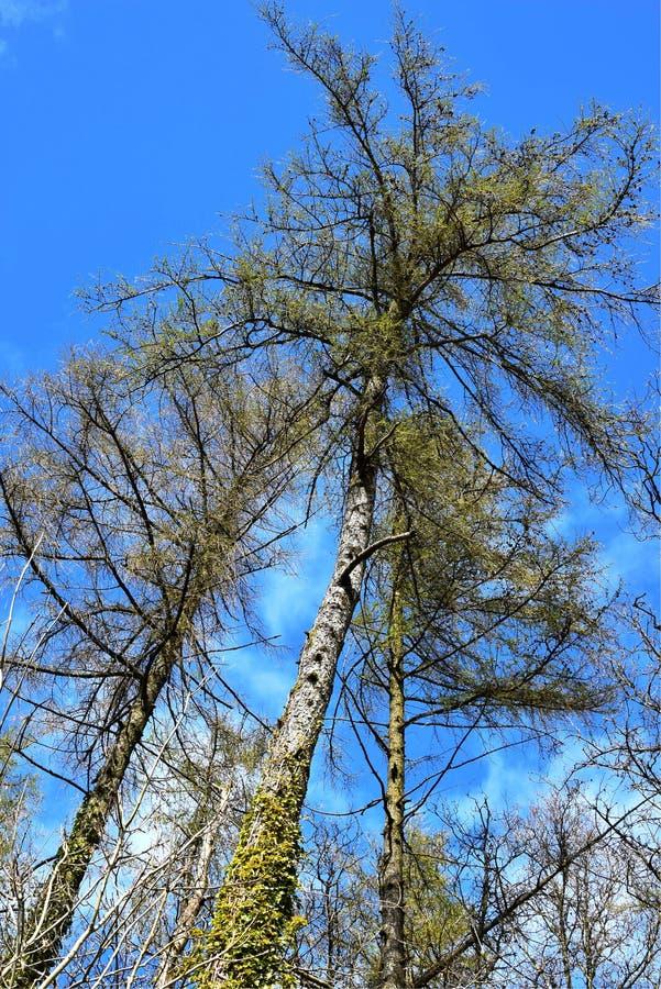 Wat bomen en mooie blauwe hemel royalty-vrije stock foto's