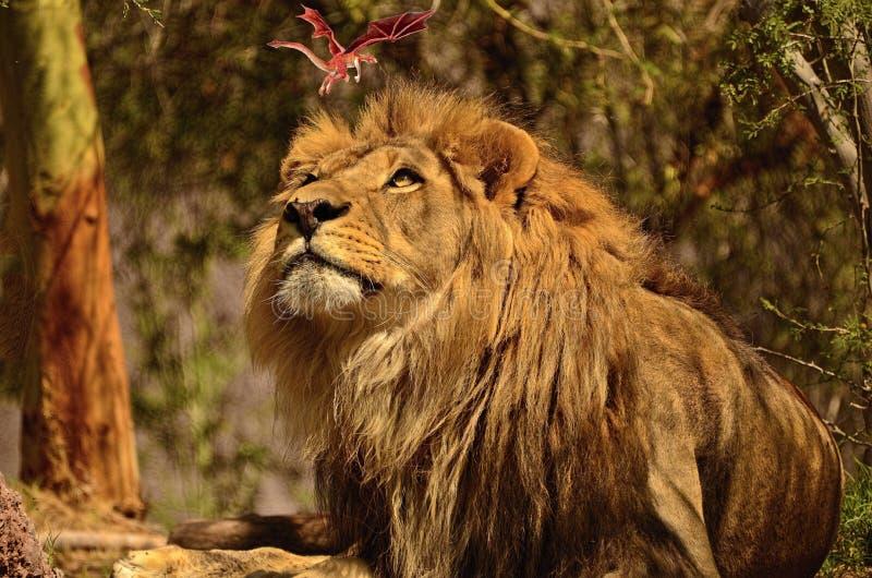 Wat de leeuw werkelijk ziet! royalty-vrije stock afbeelding