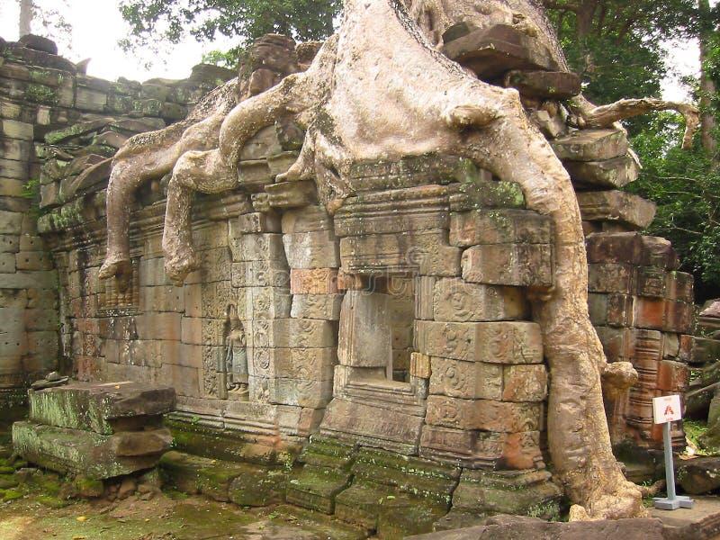 Wat För Angkorcambodia Bevuxen Tempel Arkivfoto