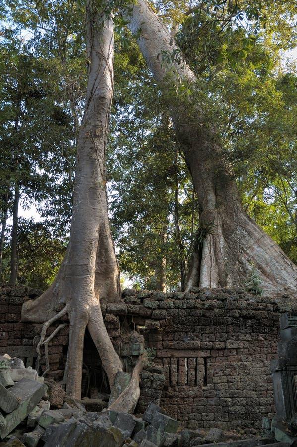 wat för tempel för angkorprohmta royaltyfria bilder
