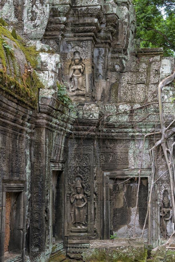 wat för tempel för ta för angkorcambodia prohm arkivbild