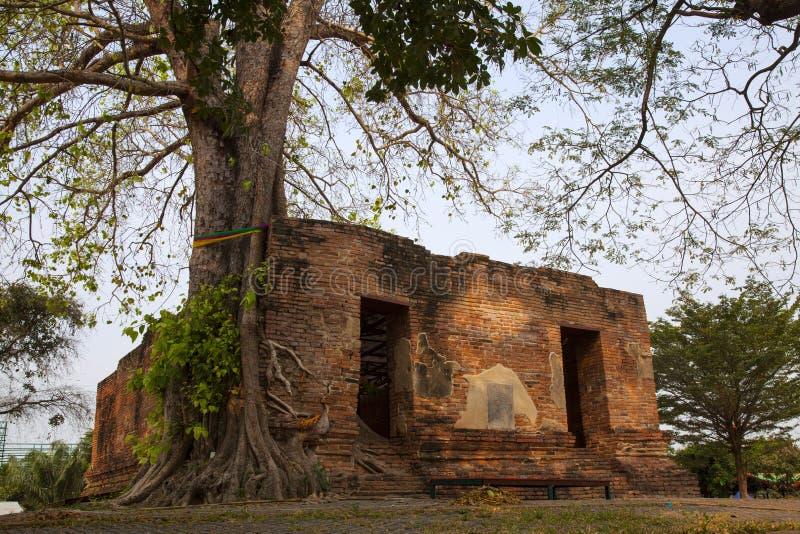 Wat Khun Inthapramun Ang Thong Province Thailand. Parasite tree at Wat Khun Inthapramun public temple in Thailand royalty free stock images