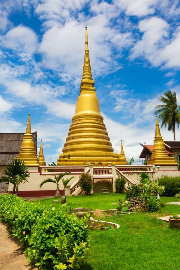 Wat larwa zdjęcie stock