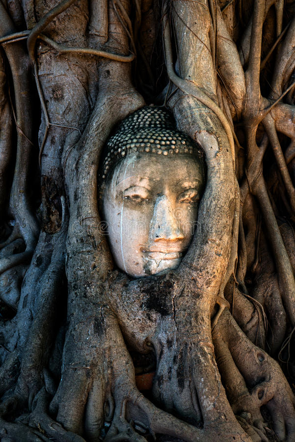Wat Mahathat泰国旅行菩萨树根 免版税库存照片