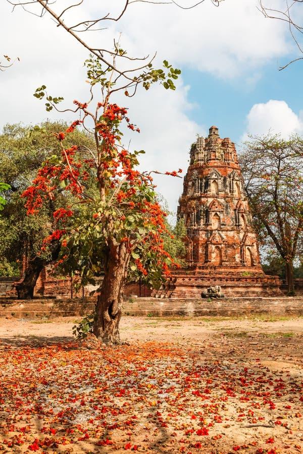 Download Wat Mahathat Im Komplex Des Buddhistischen Tempels In Ayutthaya Nahe Bangkok Thailand Stockfoto - Bild von gold, kopf: 90236920