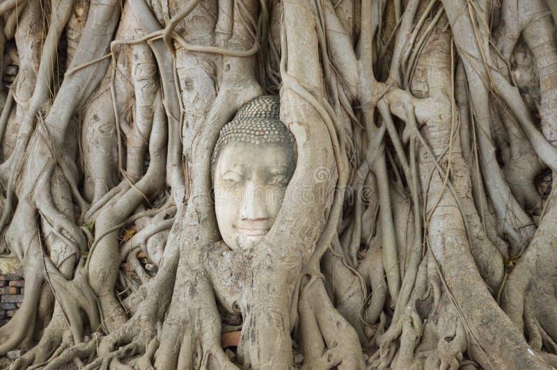 Wat Mahathat, provincia de Ayutthaya, Tailandia Cabeza del Buda, con el tronco de ?rbol y las ra?ces creciendo alrededor de ?l imágenes de archivo libres de regalías