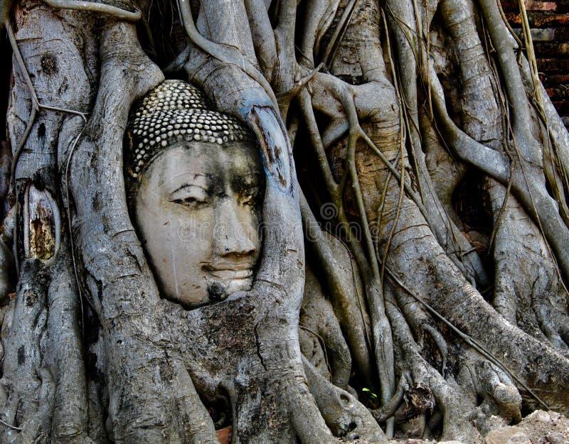 Wat Mahathat y x28; Templo del gran Relics& x29; , Cabeza en el tronco de árbol, Ayuthaya, Tailandia foto de archivo libre de regalías