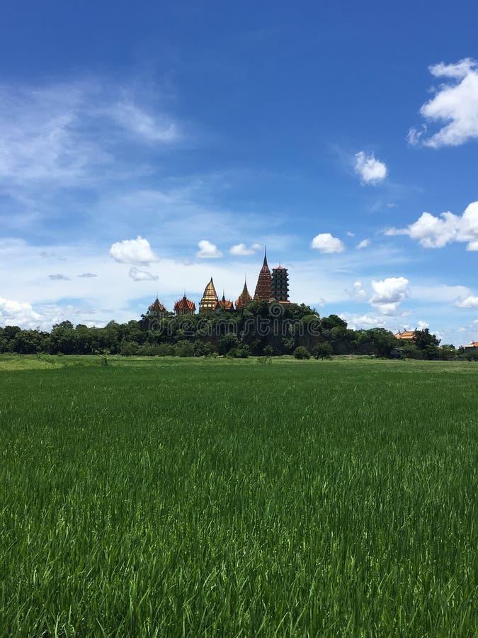 Wat Tham Sua Temple cercou por campos do arroz imagem de stock royalty free