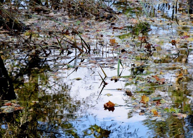 Wat in water is stock fotografie