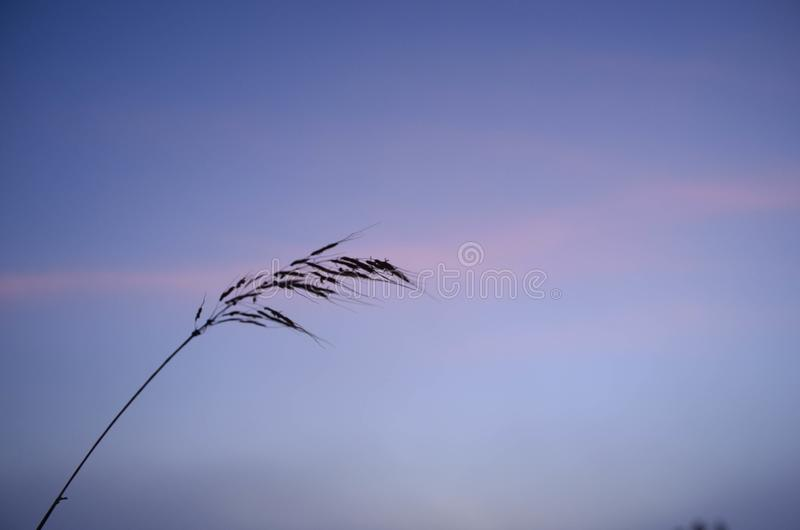 Watch the sunrise on grass royalty free stock images