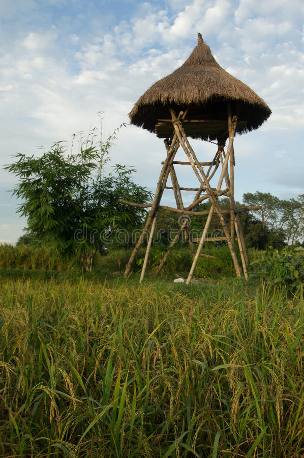Watch tower. Over the rice fields in Chitwan stock photos