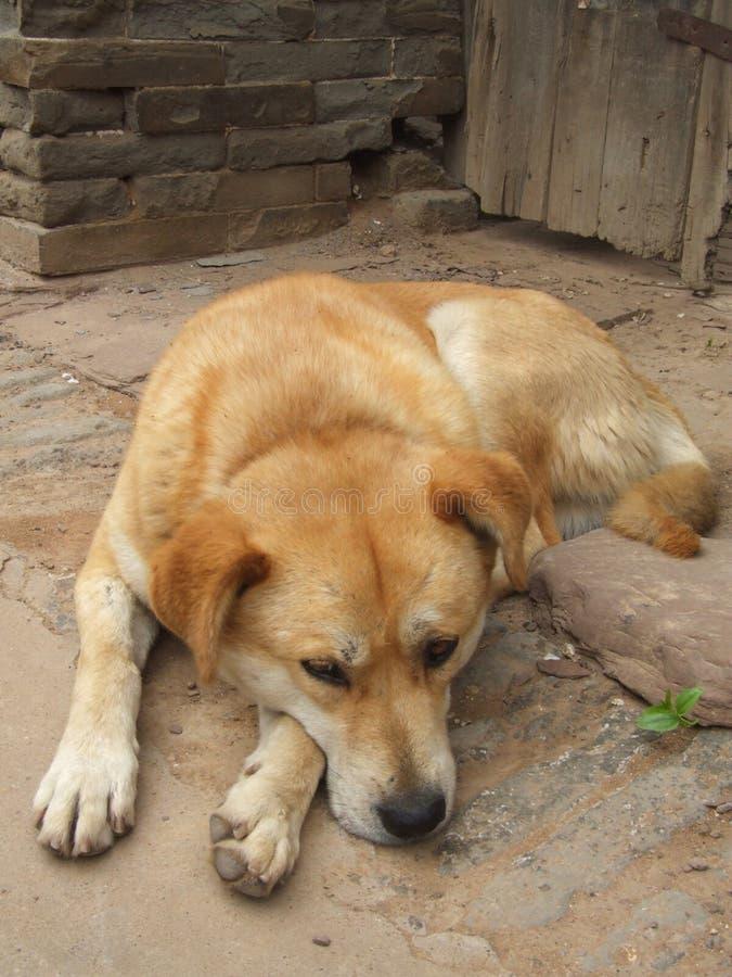 watchdog immagine stock libera da diritti