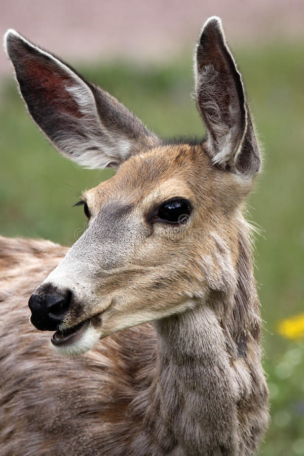 Download The Watcher stock image. Image of curious, alert, wildlife - 11304173