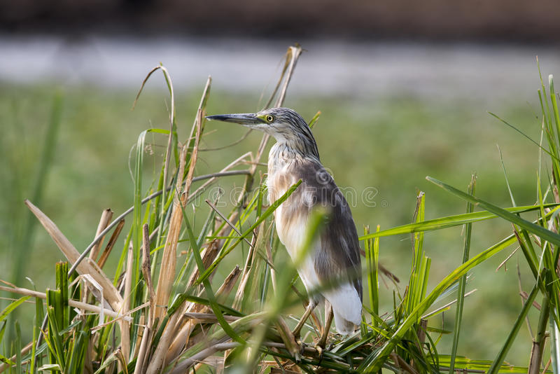 Download Watchful bird stock image. Image of safari, feathers - 34166805
