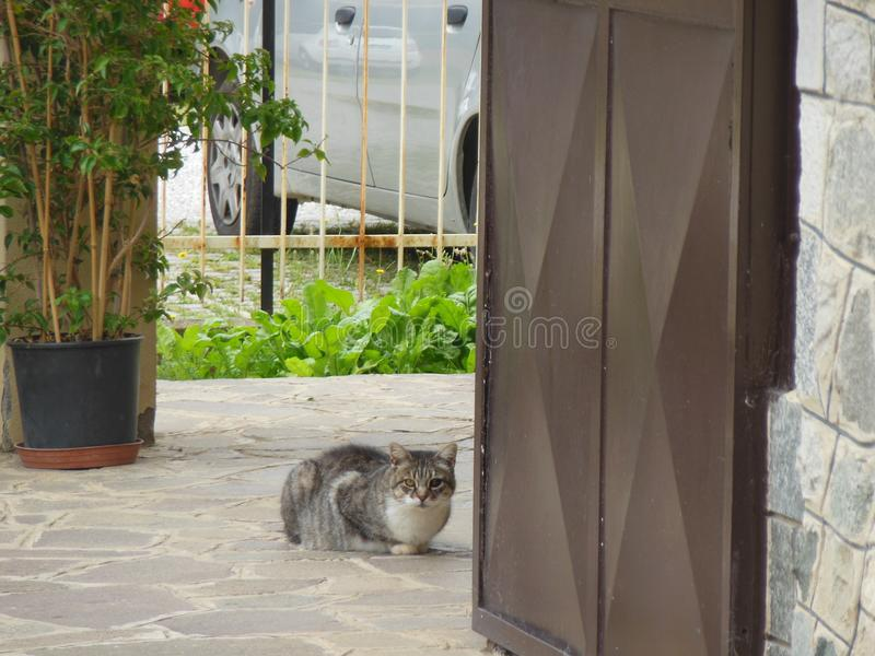 Watchful cat. Curious, watchful cat royalty free stock image