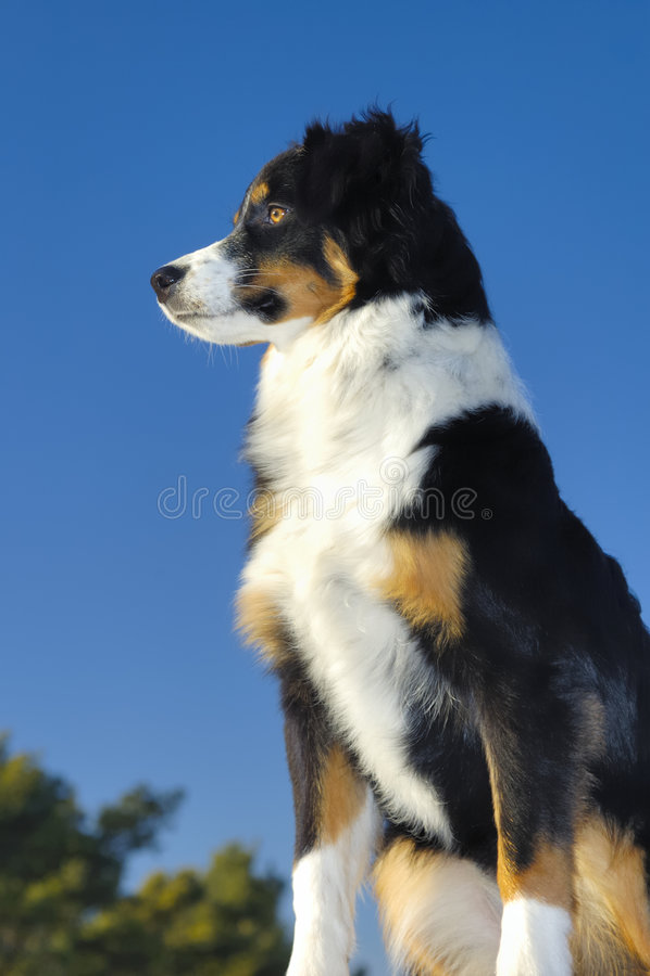watchful hund royaltyfri foto