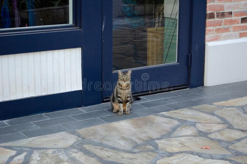 Watchful Stray Cat. Tabby cat with green eyes sitting and watching the world go by.  Stray cat sitting on sidewalk in Hawaii. Watchful stock image