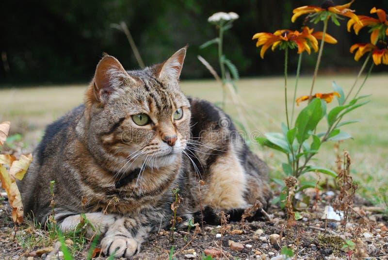 Download Watching Cat Close stock image. Image of orange, grass - 11052075
