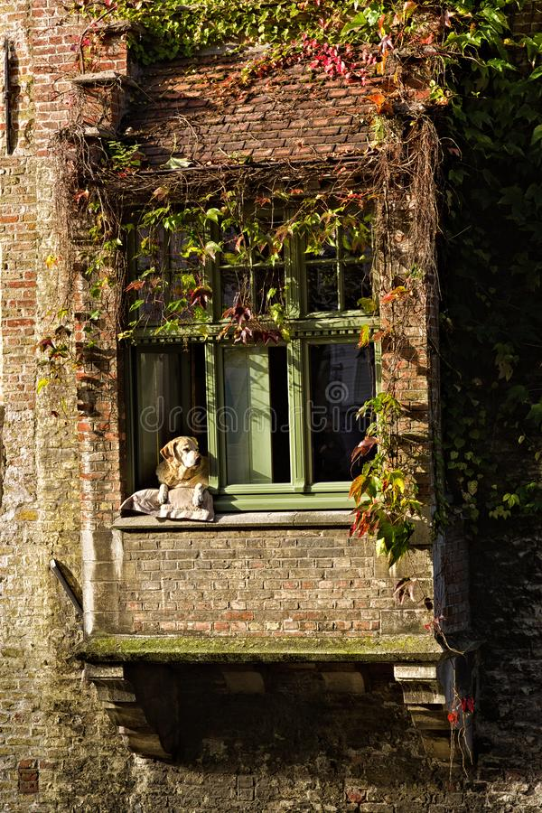 Watching the day go by. A dog leaning on the window sill watching the passer-by and life going on around him royalty free stock photography