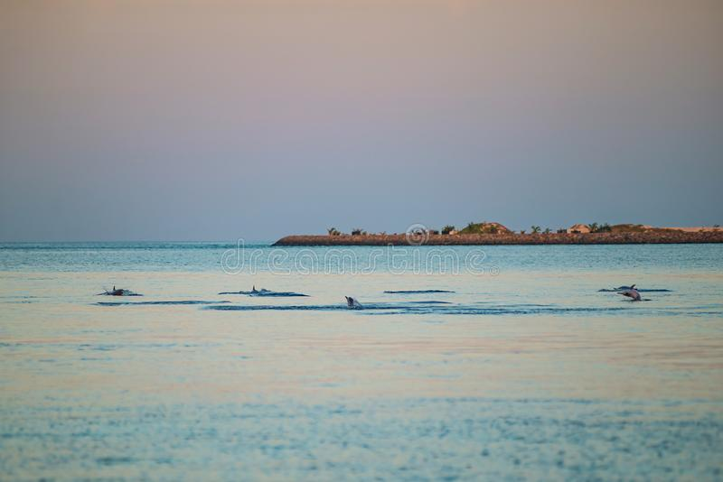 Watching dolphins at sunset or at sunrise, dolphins in the indian ocean stock photo