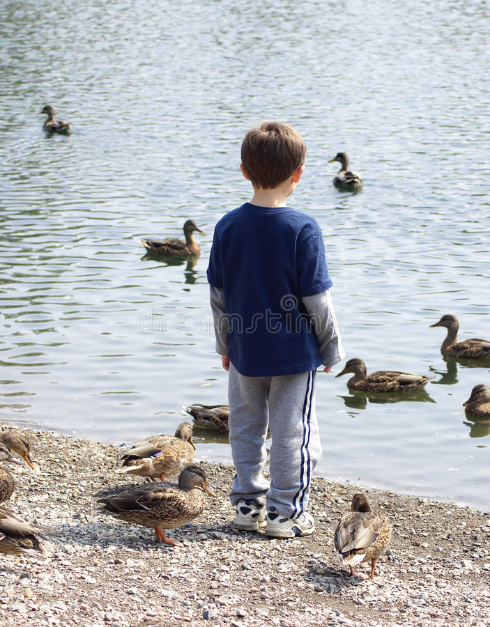 Download Watching The Ducks Stock Photos - Image: 1705863