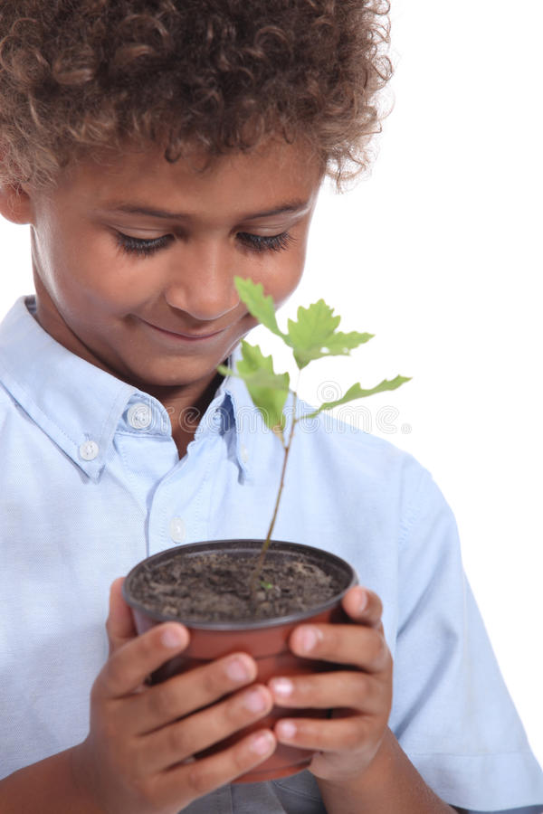 Watching plant grow stock photography