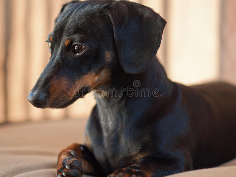 Watching Puppy stock photos