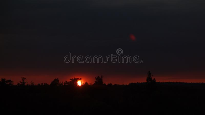 Setting sun in the woods. royalty free stock image