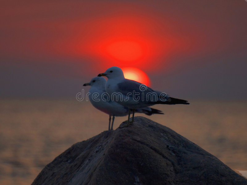 Watching the sunset. Two seagulls standing on a rock in the water at sunset royalty free stock photography