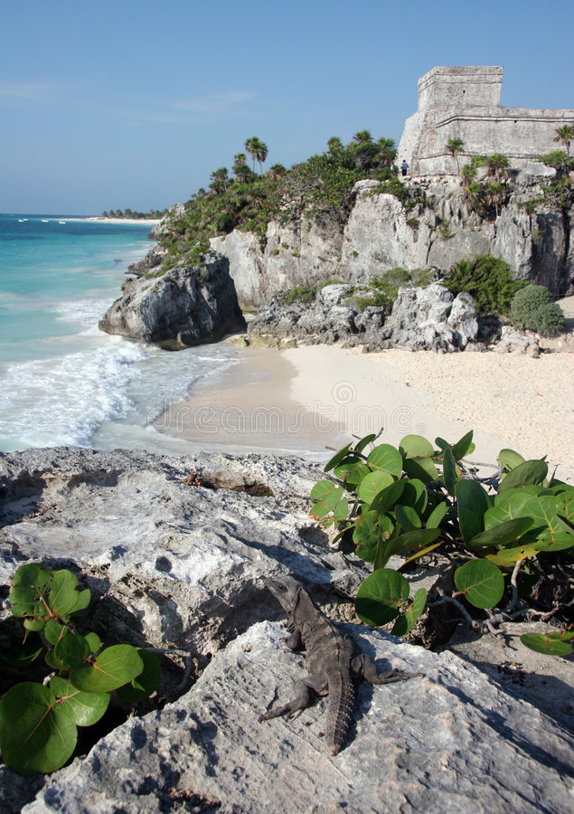 Free Watching Tulum Ruins With A Lizard Stock Photo - 5102870