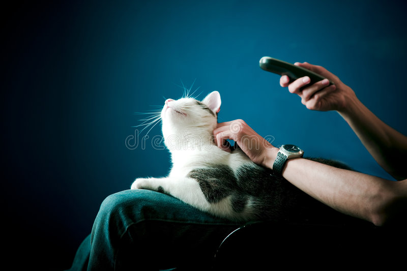 Watching tv. Man watching tv with his cat on his lap royalty free stock photography