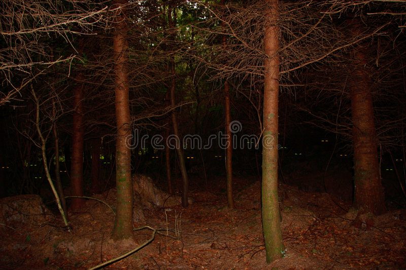 Download Watching you stock image. Image of frightening, trees - 3993475