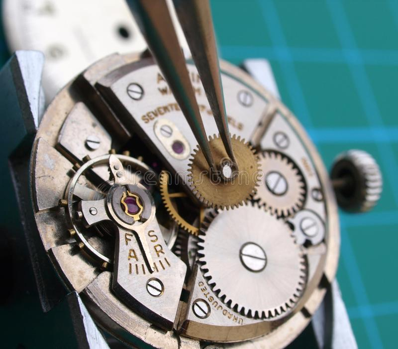 Watchmaker repairing watch. Close up of watchmaker repairing watch mechanical caliber, taking small gear with tweezers royalty free stock photos