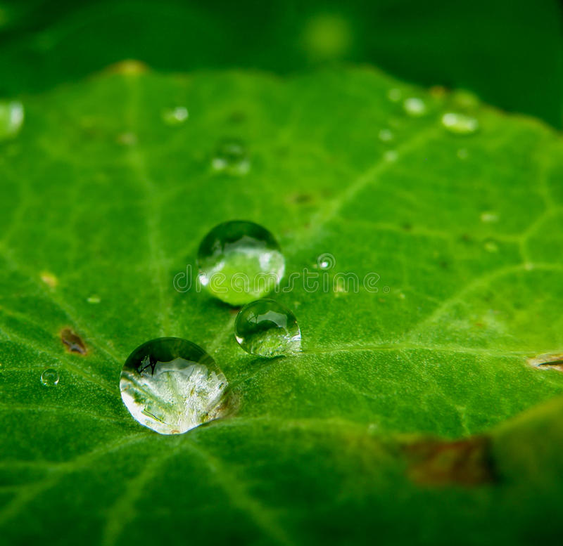 Wate drops on leaf royalty free stock photography