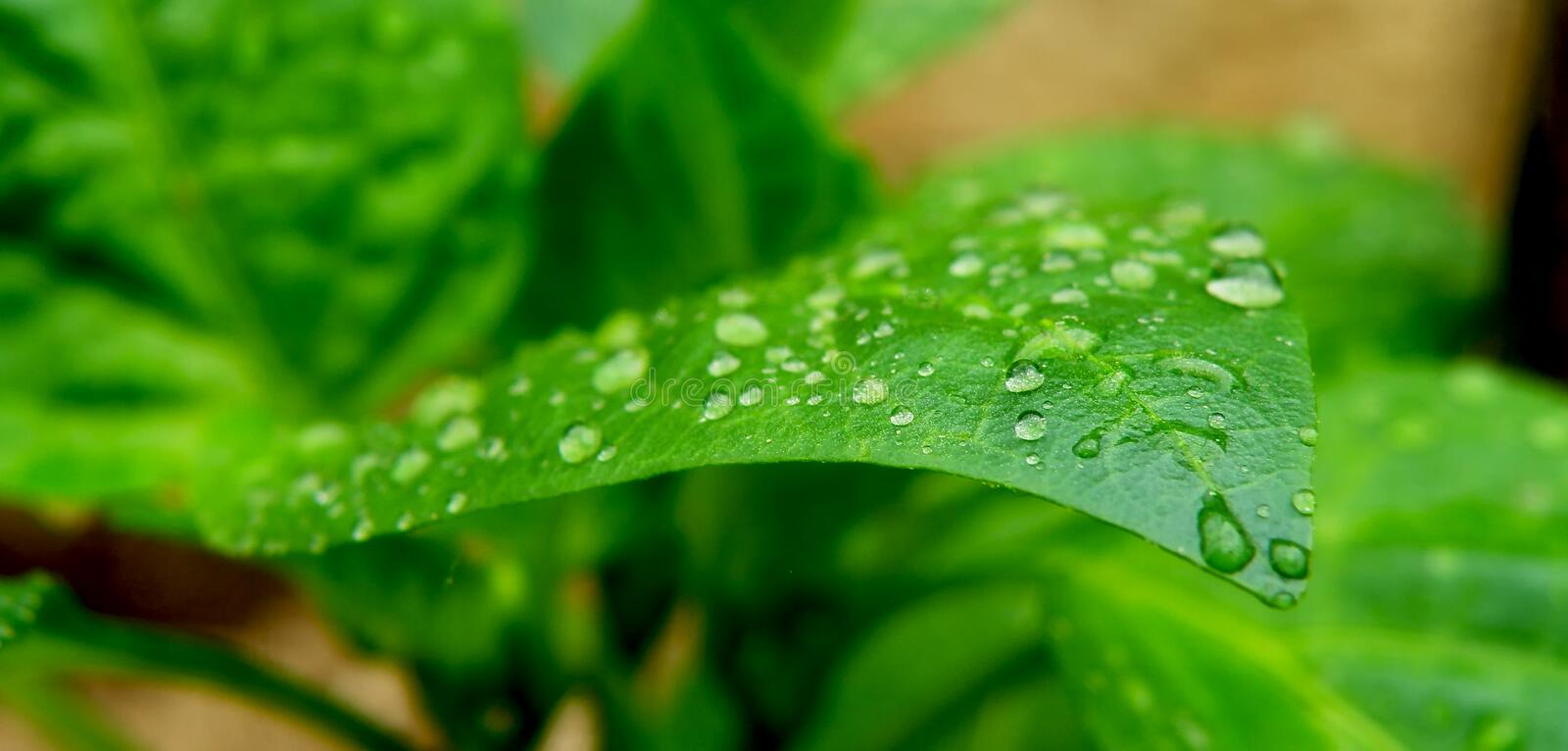 Download Wate Drops On Leaf Stock Image - Image: 24609421