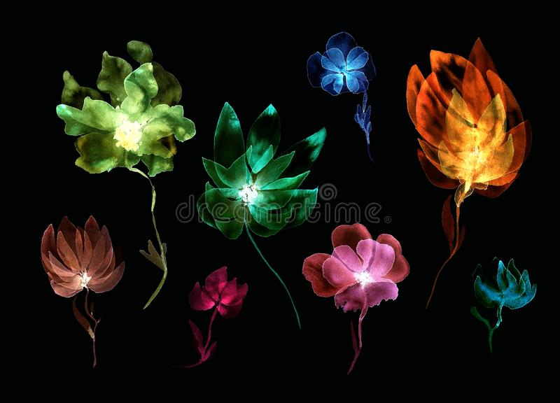 Watecolor set of transparent layered flowers on black. Floral expressive composition. Watecolor set of transparent layered flowers. Hand painted elements royalty free illustration